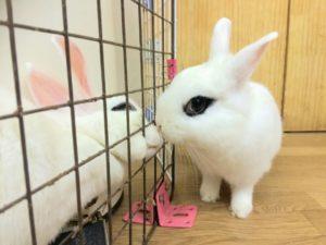 土用丑の日のウサギ&ドワーフホトのメイちゃん11