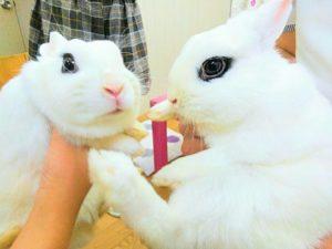 土用丑の日のウサギ&ドワーフホトのメイちゃん7