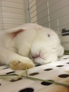 土用丑の日のウサギ&ドワーフホトのメイちゃん5