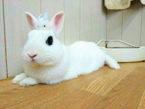 土用丑の日のウサギ&ドワーフホトのメイちゃん14