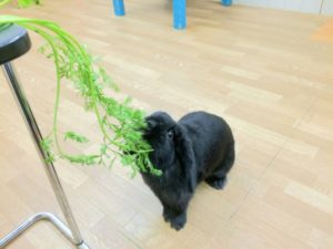 みんな大好きにんじんの葉っぱ!7