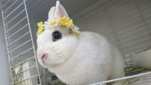 土用丑の日のウサギ&ドワーフホトのメイちゃん6