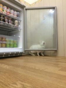 冷蔵庫からの脱出劇~うさぎホテル2