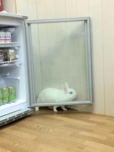冷蔵庫からの脱出劇~うさぎホテル1