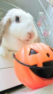 2016年版かぼちゃが発売されました!5