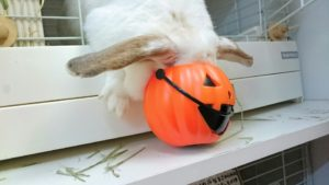 2016年版かぼちゃが発売されました!3