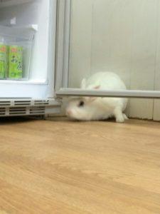 冷蔵庫からの脱出劇~うさぎホテル3