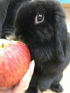 リンゴたべるょー!5
