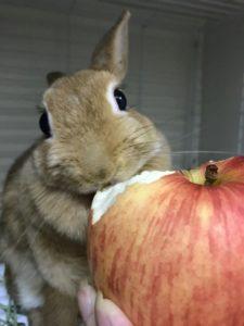 リンゴたべるょー!6