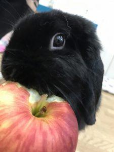 リンゴたべるょー!4