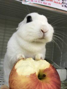 リンゴたべるょー!2