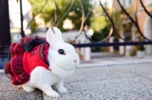 うさぎカフェ「グリーンリーフ」-Rabbit Cafe 【GREEN LEAF】群馬県