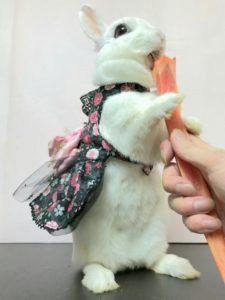 撮影セットでびび様を撮る!6