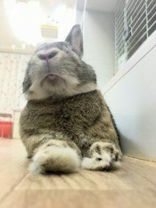 ミッシュちゃんの寝ている隙に~同伴うさぎさん「ひめくん」7