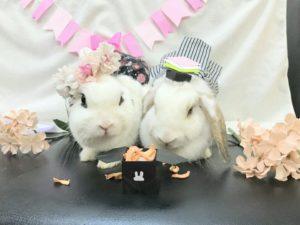 ひな祭りは、みみ(3月3日)の日!~たまの様子4