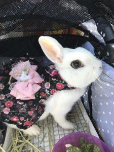 うさフェス春2017(3月18日)をびび様と…14
