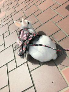 うさフェス春2017(3月18日)をびび様と…8