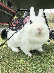 うさフェス春2017(3月18日)をびび様と…13