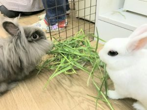 びび様とリヤンちゃんと生牧草♪3