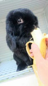 ミッシュちゃんのバナナだょ!8