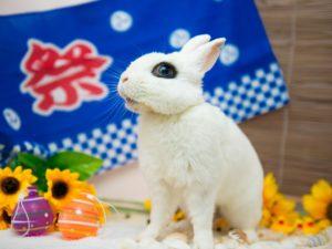 うさぎ専門店&うさぎカフェPetit Rabbitry(東伏見)