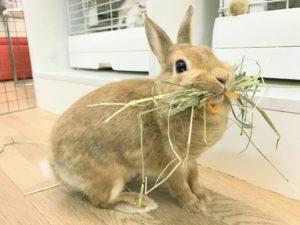 みかんちゃんの巣作り禁止…ダメ、絶対!3