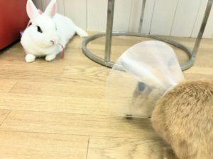 みかんちゃんの巣作り禁止…ダメ、絶対!5