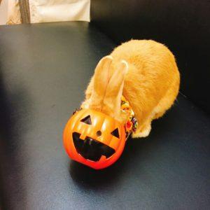 かぼちゃの顔したミッシュちゃん!6