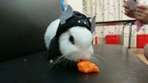 ねこハロウィンちゃんアレンジファッション♪1