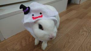 ねこハロウィンちゃんアレンジファッション♪8