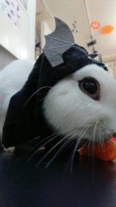 ねこハロウィンちゃんアレンジファッション♪3