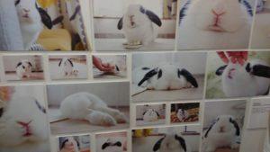 うさぎしんぼる展2017に行って来ました!5