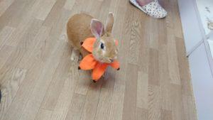 ねこハロウィンちゃんアレンジファッション♪6