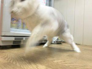 うさけつコレクション☆13