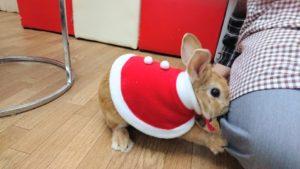 うさびびクリスマス2017☆10
