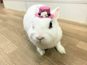 ウサロック帽をのっけてみたよ♪4