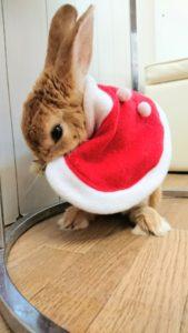 うさびびクリスマス2017☆9