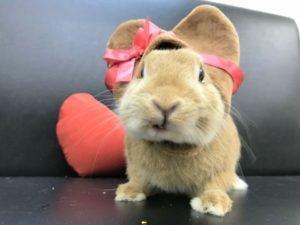 バレンタインなのでチョコレートにへんしん!4