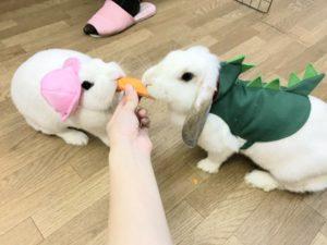 うさぎ幼稚園「うさびび」~ミッシュちゃんのお食事2
