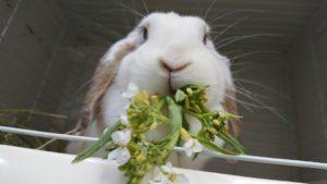 びび様、やっぱり春のうさフェスいくよ!」6