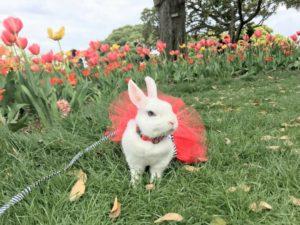 【うさフェス2018春】4月14日、びび様行ってきたよ!12
