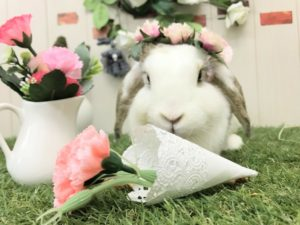 【 Rabbit Mother's Day】うさびびからのお知らせ8