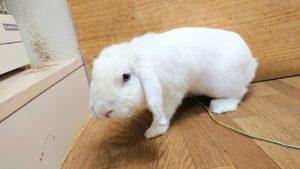 【 Rabbit Mother's Day】うさびびからのお知らせ3
