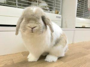 【 Rabbit Mother's Day】うさびびからのお知らせ12