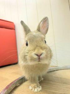 【 Rabbit Mother's Day】うさびびからのお知らせ17
