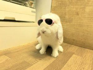 紫外線には、うさぎサングラス?1