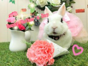 【 Rabbit Mother's Day】うさびびからのお知らせ9