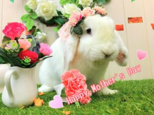 【 Rabbit Mother's Day】うさびびからのお知らせ5