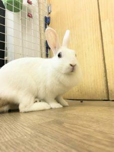 【 Rabbit Mother's Day】うさびびからのお知らせ14