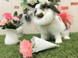 【 Rabbit Mother's Day】うさびびからのお知らせ2